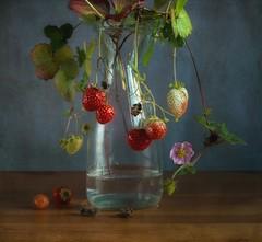 Autumn Strawberries (vesna1962) Tags: stilllife strawberries homegrown flowering tabletop autumn textured stilllifephotoart