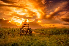 The Ecstasy of Gold (miTsu-llaneous) Tags: trinidad trinidadandtobago sunrise tractor morning dawn nature gold goldenhour agriculture nikon d5200 tokina 1116mm