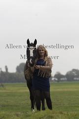 15 oktober 2016-60-2 (MZorro4) Tags: mariekehaverfotografie oudesluis schagen paardenfotografie portretfotos rijden wwwmariekehaverfotografienlpaarden