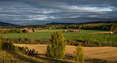 Øvre Eiker II (A.Husvaer) Tags: norge eiker lowsun light sky clouds norway farmland