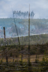 FIRE FALLOUT (Deborah Hughes Photography) Tags: yellowstone fires forestfires me multipleexposures lodgepolepine pines trees hotsprints