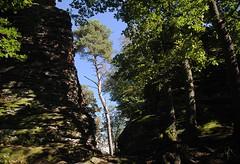 20161002-058F (m-klueber.de) Tags: 20161002028f 20161002 2016 mkbildkatalog pfalz pflzer wald wasgau pflzerwald annweiler trifels jungturm mnz scharfenberg sandstein felsen