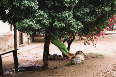 Playing with Trees (SerCorzo) Tags: girl child she tree arbol trees arboles colombia town pueblo 60d canon playing fun diversion divertido jugando portrait retrato chica nia legs happy happiness feliz felicidad