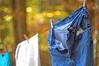 Clean Jeans (Fiddling Bob) Tags: bluejeans clothesline clothespins m42 supertakumar5014 washingday