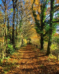 Autumn Path (Marc Sayce) Tags: tree lined path autumn forest alice holt hampshire wrecclesham farnham surrey south downs national park 2016