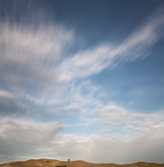a tree grows in pacifica (hbphototeach) Tags: pacifica bayarea california tree ridge sky clouds lowhorizon extrememinimalism minimalism simplicity landscape landscapephotography mirrorless sonya7rii color longexposure longexposurephotography squarecrop humblelandscape