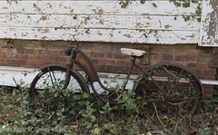 20161102-BFF_8778-3 (Bonnie Forman-Franco) Tags: abandoned abandonedbarn bicycle gardenersnake smithtown stonybrook turtles reflection duck americanwidgeon