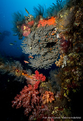 Corals at the Liberty (Sabrina.I) Tags: tulamben indonesien tauchen wreck wreckdiving corals liberty bali diving underwater sea ocean water