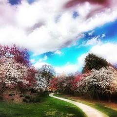 IMG_4521 (sosparkly) Tags: instagram nature trees plants paris england edinburgh florida bermuda beach whimsy