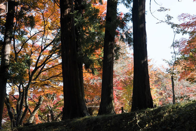 mochizuri 09
