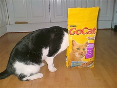 GUINNESS - caught in the act . Pyrford , Nov. 2004 (busmothy) Tags: guinness kitchen snack artfulcat gocat