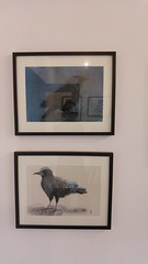 As the Crow Flies (delicate stitches) Tags: art textiles drawing solo exhibition rspb crow jay rook raven chough jackdaw arttextiles helenwalsh geltsdale pennines gallery show delicatestitches embroidery wire sculpture