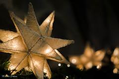 Star light, star bright... (melike erkan) Tags: mantel light star starlight farmmarket christmas holiday dof bokeh
