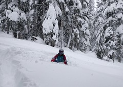 Extricating myself from deep powder, 26th November (Ruth and Dave) Tags: ruth snowboarder whistler whistlerblackcomb enchantedforest powder deep stuck buried wading escaping extricating weather weatherphotography