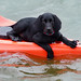 Pup on a Kayak