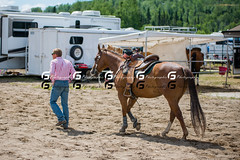 Gymkhana Falardeau21448 (Glenn Fullum) Tags: horse nikon barrels sigma full frame chevaux baril gymkhana 70200f28 d610 sigma70200 falardeau