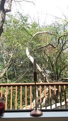 Emerald Hills cabin, 23 August 2015 (nosha) Tags: