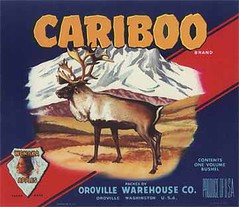 """Cariboo • <a style=""""font-size:0.8em;"""" href=""""http://www.flickr.com/photos/136320455@N08/20849013674/"""" target=""""_blank"""">View on Flickr</a>"""