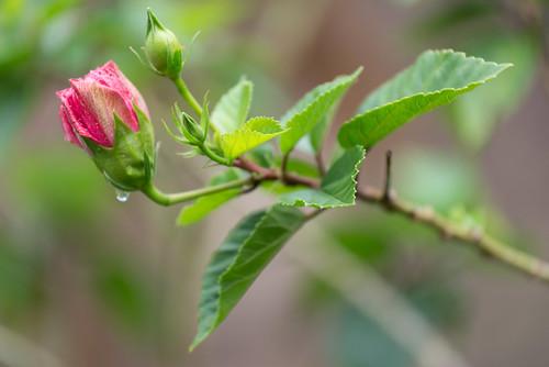 Eine Rose im Dschungel