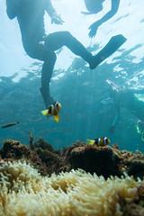 20150905-DSC_2518.jpg (d3_plus) Tags: sea sky fish beach japan 1 scenery underwater diving snorkeling  nikkor shizuoka   vr  apnea izu j4  waterproofcase    skindiving minamiizu f3556       nikon1 hirizo  1030mm  nakagi pdzoom 1  nikon1j4 1nikkorvr1030mmf3556pdzoom beachhirizo misakafishingport  1030mmpd nikonwpn3 wpn3