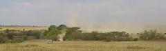 _DSC1125. Gnu på vei mot Mara River. (Berit Christophersen) Tags: landscape kenya wildlife safari zebra gnu wildebeest masaimara sebra sonyalpha