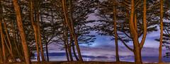 marina park bayside (pbo31) Tags: sanfrancisco california park bridge trees sky panorama color fall night clouds marina dark nikon october purple earth large panoramic baybridge bayarea eastbay sas 80 emeryville stitched alamedacounty 2015 boury pbo31 easternspan d810