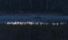 Morning - D8D_4416 (Viggo Johansen) Tags: trees lake water frost rime telemark birk haukeli vgsli