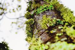 Pray for rain #raining #nature #naturephotography #nikon #prayforrain #beautiful (brinksphotos) Tags: nature beautiful nikon raining naturephotography prayforrain