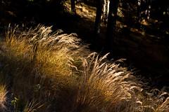Rayon de soleil dans un sous-bois (Sophie Gachet) Tags: autumn sky mountain nature automne canon landscape valais