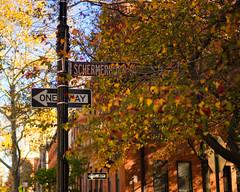 Fall Hits Schermerhorn St, Brooklyn Heights (1 of 1) (Diacritical) Tags: color fall colors leaves brooklyn iso200 brooklynheights 35 f20 0ev summiluxm11435asph centerweightedaverage leicacameraag sec secatf20 leicamtyp240 douglascpalmer november42015