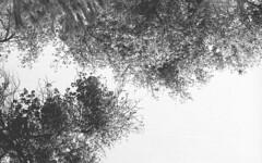 stuff (Roger Durn) Tags: film 35mm 400 ilford analogica analogic ilfordpan400 filmisnotdead pan400 epsonv550