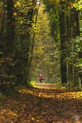2015-11-08_Q8B4290 © Sylvain Collet.jpg (sylvain.collet) Tags: autumn trees france leaves automne leaf arbres sur feuilles marne vairessurmarne vaires