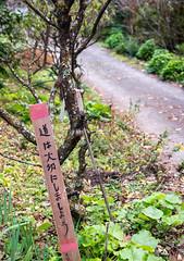 TOKUSHIMA DAYS - Kamikatsu (junog007) Tags: road autumn tree japan nikon shikoku tokushima autumnalleaves d800 2470mm kamikatsu nanocrystalcoat