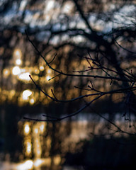 Knoppen (Martijn_68) Tags: sunrise takken zonsopgang knoppen