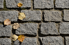 Otoño madrileño 06 -- [Explorer] (Cazador de imágenes) Tags: madrid street autumn españa spain nikon streetphotography otoño streetphoto espagne spanien spagna spanje spania 西班牙 empedrado 2015 granito spange 2013 d7000
