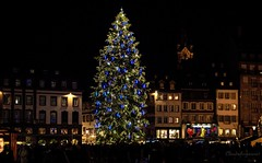 Huge Xmas Tree - Strasbourg 2015 (Cloudwhisperer67) Tags: world show santa christmas street xmas city trip travel blue friends light urban white black france green art love colors beautiful yellow fairytale night canon silver dark landscape fun photography lights golden evening town scenery funny colorful europa europe cityscape place nightscape darkness spirit father great scene noel strasbourg explore fairy journey alsace huge colored claus lovely noël scape incredible amateur let tale begin 760 2015 2013 hx9v cloudwhisperer67 760d