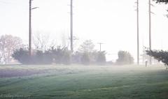IMG_1922 (hillarycharris) Tags: morning trees mist nature fog sunrise canon landscape outdoors foggy tamron morningmist naturephotography morningfog mistymorning treesinfog foggytrees foggylandscape sunrisephotography treesinmist mistylandscape canonrebelt5 canoneost5
