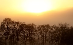 foggy sunshine (Suzie Noble) Tags: trees sunshine fog december strathglass struy