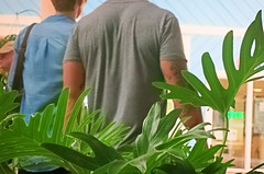 Foliage (LarryJay99 ) Tags: puntagorda florida fishermansvillage mall urban people arms musculararms tatts tattoos backs greens foliage guy candid unsuspecting shoulders random peopleurban citypeople streetpeople