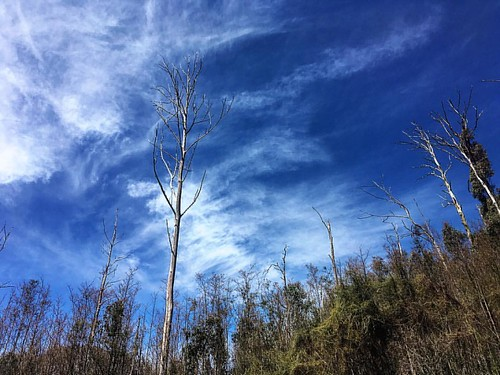 Aftermath of Black Saturday fires,  Steavenson Falls, #Marysville. #Australia