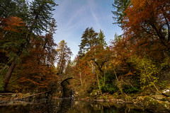 It's all about the trees (Kyoshi Masamune) Tags: thehermitage dunkeld autumn water wideangle ultrawideangle kyoshimasamune scotland perthshire perthandkinross riverbraan tayforestpark braan colourfultrees autumncolours cokinfilters cokinnd8 nd8 hdr highdynamicrange uk
