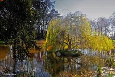Saule pleureur au coucher du soleil (didier95) Tags: arbre paysage parcnaturelduvexin vexin saulepleureur etang eau printemps themericourt valdoise iledefrance reflet vert