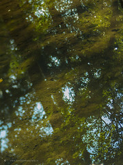 Reflection (watikziefotografie) Tags: reflection water trees tree sky forest autumn ground green brown lensbaby edge50