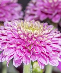 flower3 (Debbie Deboo) Tags: flower macro closeup petals stamens purple