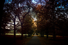 Truly alone maybe (Melissa Maples) Tags: ludwigsburg germany deutschland europe apple iphone iphone6 cameraphone favorite favoritepark park autumn trees road path dawn morning