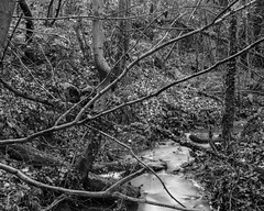 Branches over the burn ( Stanley Burn  Woods) (Jonathan Carr) Tags: burn stream water black white bw toyo45a largeformat 4x5 5x4 landscape rural northeast abstract abstraction trees