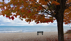 Great View, No Takers (jameskirchner15) Tags: bench hbm beach lake water greatlakes lakehuron michigan tree fall fallcolor leaves autumn scene park harrisvillestatepark sand pentax