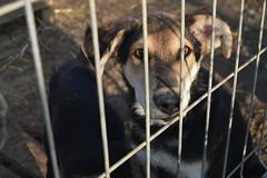 DSC_0516 (adi.buciuman) Tags: dog outside contact eye deep inocent