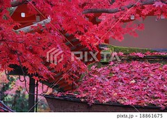 18861675 (finalistJPN) Tags: autumnleaves autumncolors kyoto kibune worldheritage redleaves nationalgeographic discoverychannel japanguide visitjapan discoverjapan stockphotos availablenow