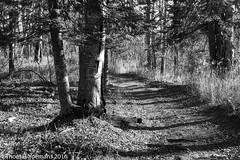 Trails in Temperance River State Park, Minnesota Northshore (Tom Yoemans) Tags: temperance river state park tofte minnesota